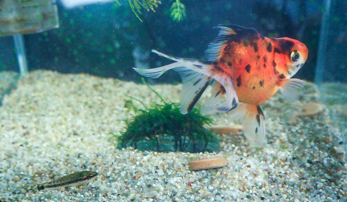 【小ネタ】森のオフィスで飼われているメダカと金魚が癒やされる…!